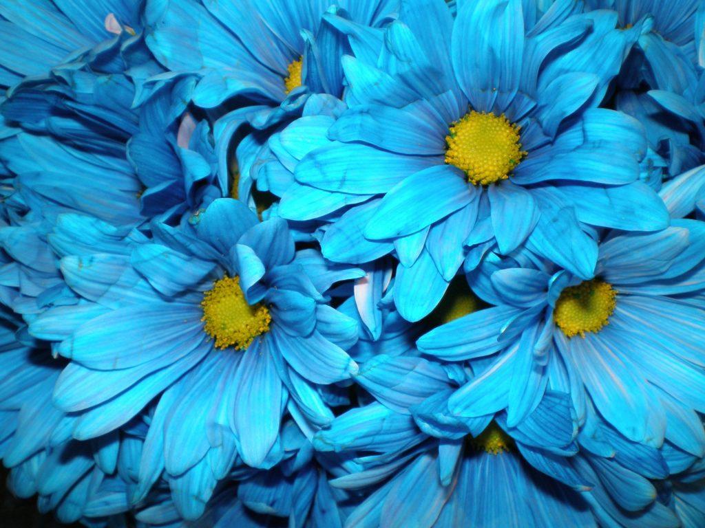 картинки ярко-синего цвета используется несъемный